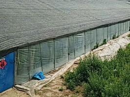贵州大棚专用遮阳网